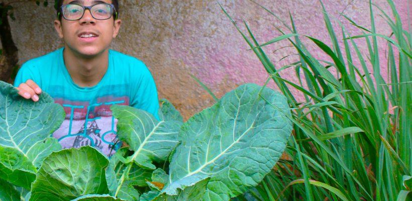 Instituto Norberto cria projeto de Horta Terapia para aprimorar o desenvolvimento dos atendidos